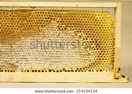 Wooden frame for mounting in a beehive where the bees accumulate wax combs - stock photo