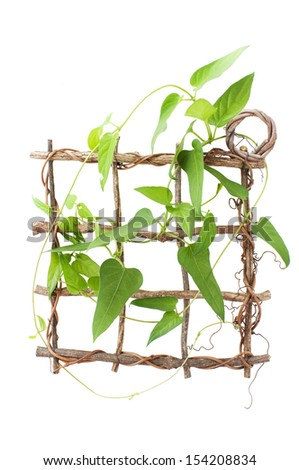 wooden frame wind round with ivy