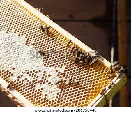 Wooden frame with bee honeycombs filled with honey and bees - stock photo