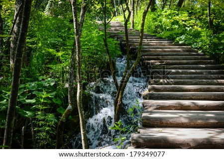 Wooden Hiking Path or Trail in a Forest