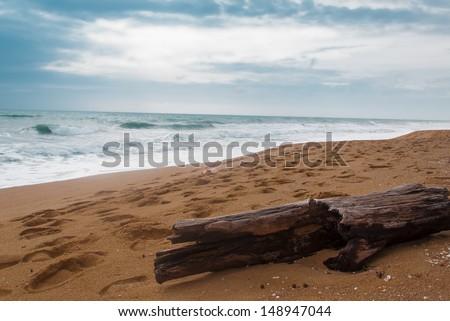 Wooden log on the sea shore sea beach - stock photo