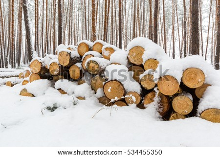 wooden log store under snow in winter pine forest