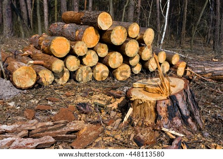 wooden logs and tree stump on meadow in forest  - stock photo