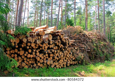 Wooden logs and wood fuel stacked side by side in green forest. - stock photo