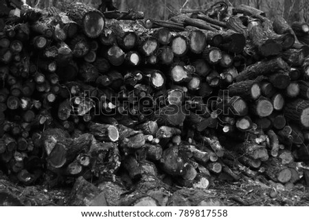 Wooden logs are packed in a heap.