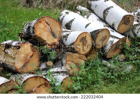 Wooden logs of birch trees, close-up - stock photo
