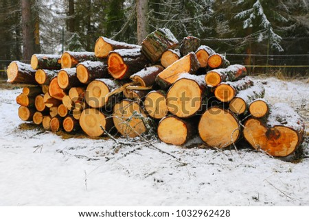 wooden logs store in winter forest