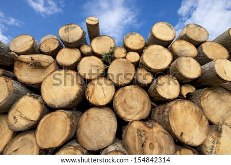 Wooden Logs with Blue Sky on Background / Cut timber in a pile, against a blue sky with clouds - stock photo