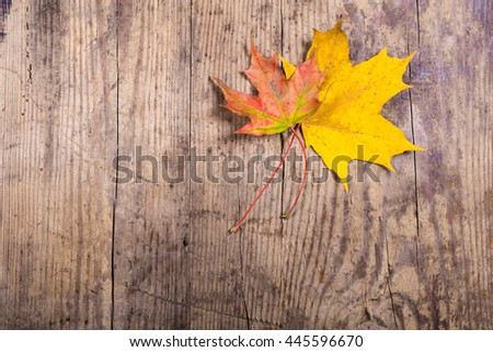 Wooden natural background with autumn yellow leaves and space for text