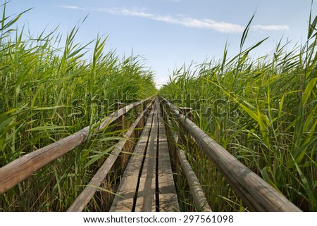 Wooden path above the lake. - stock photo
