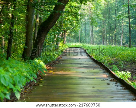 Wooden path in forest after rain, Bialowieza, Poland - stock photo