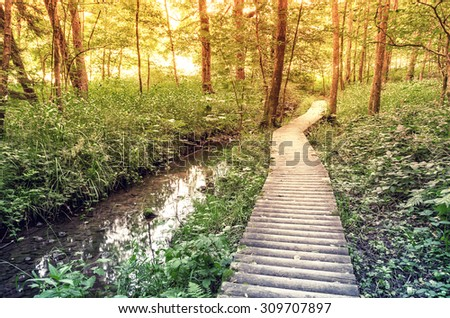 Wooden path in the forest along the river.