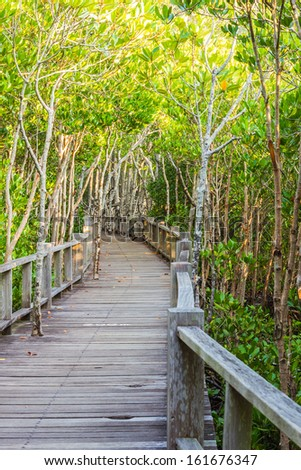 wooden path is boardwalk  in mangrove forest