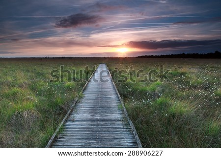 wooden path on marsh and summer sunset
