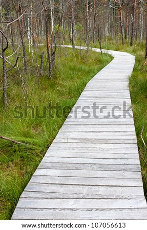 Wooden path through marsh on a summer day