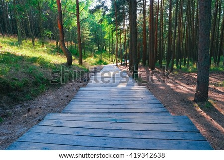 Wooden path through pine trees in forest - stock photo