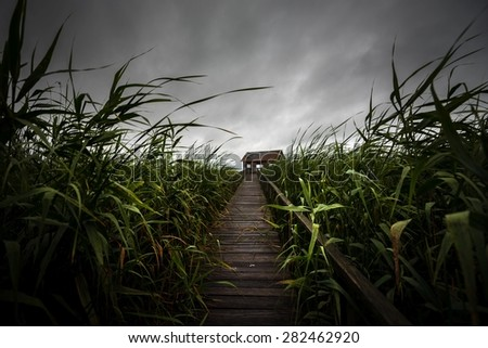 Wooden path trough the reed outdoors at summer - stock photo