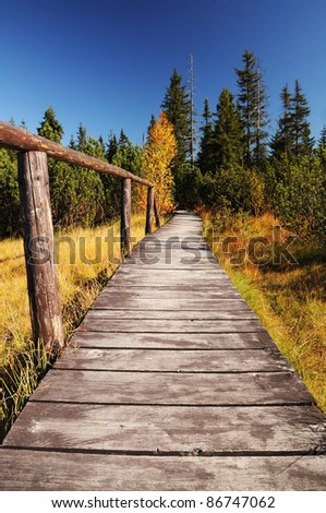 Wooden path walkway through wetlands and forest, Czech republic - stock photo
