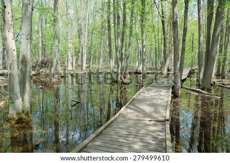 Wooden pathway over a swamp area - stock photo