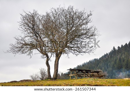Wooden picnic table under the tree  - stock photo