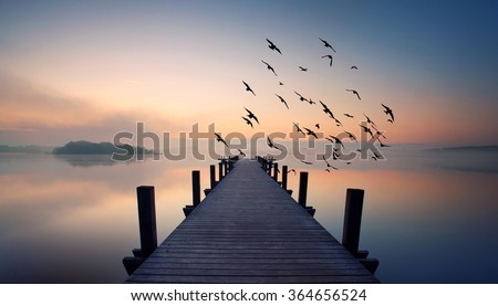 wooden pier and some flying birds on lake in summer morning