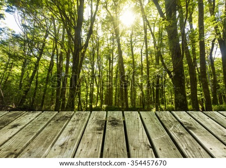 wooden pier with lush forest  background - stock photo