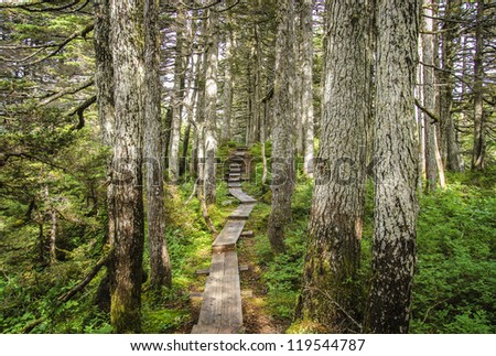 Wooden plank path through the forest near Whittier Alaska in summer.
