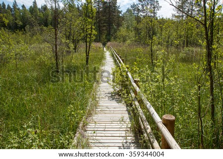 Wooden plank pathway