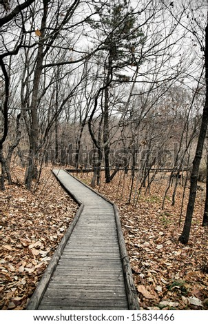 Wooden Plank Trail leading off throug the wooded forest