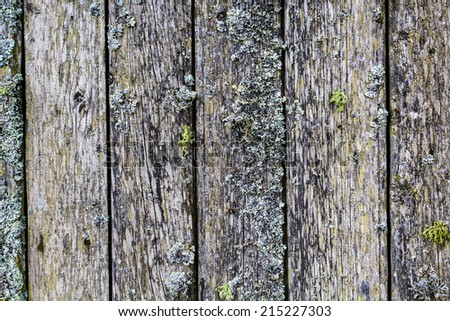 Wooden planks covered with moss as background