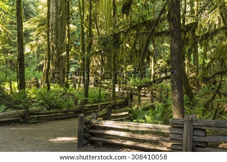 Wooden railing line the trails amongst the giants trees in Cathedral Grove, MacMillan Provincial Park, Vancouver Island, BC - stock photo