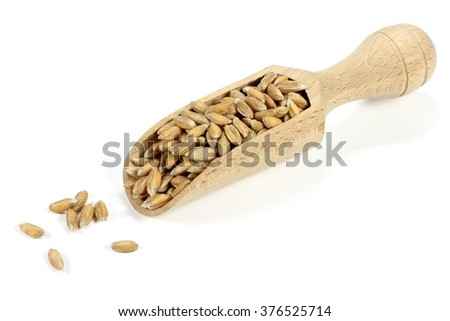 wooden scoop with wheat grains isolated on white background - stock photo