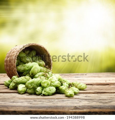 wooden sill and green garden of hop  - stock photo