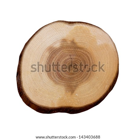 Wooden slice on white background
