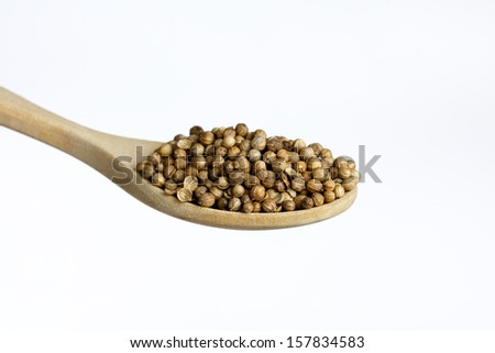 Wooden spoon, full of  coriander, isolated on white background