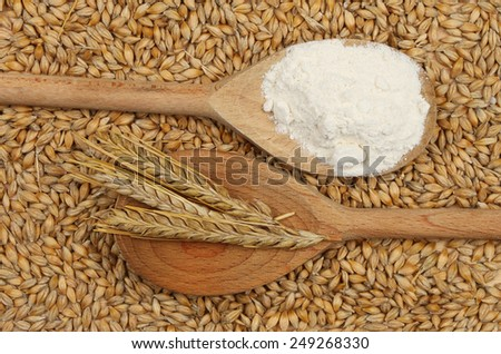 Wooden spoons with flour and ears of barley surrounded by grains of barley - stock photo