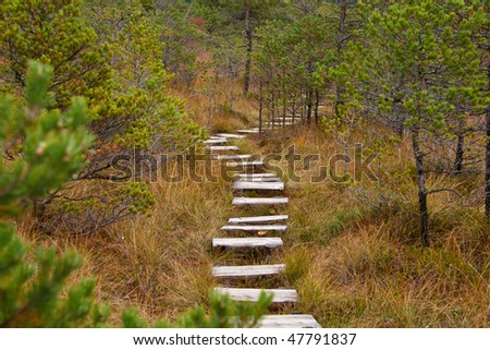 Wooden stairs through the forest in autumn - stock photo