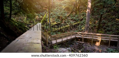 Wooden steps in an evergreen rain forest.