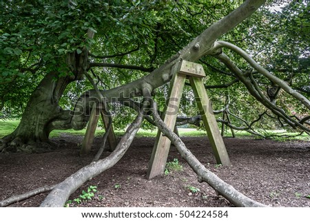 Wooden structure supporting a large tree branch.