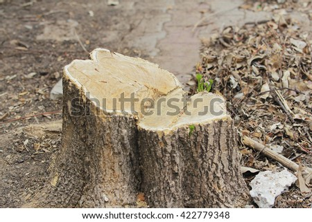 wooden stump - stock photo