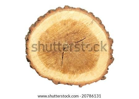 Wooden stump isolated on white. - stock photo