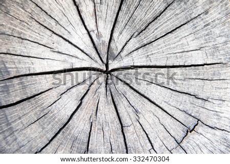 Wooden stump texture - stock photo