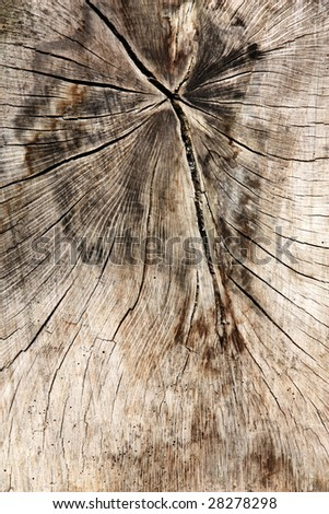 Wooden surface background. Organic textured abstract. Tree cross-section.