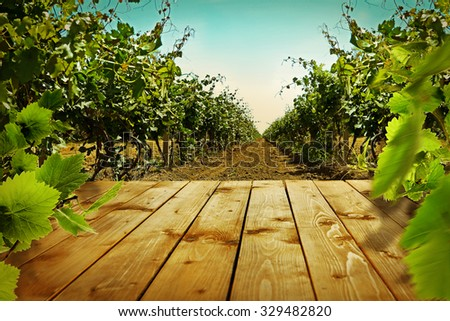 Wooden table with vineyard - stock photo