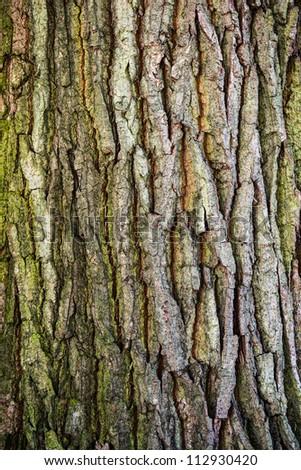 wooden texture - bark of old oak tree - stock photo