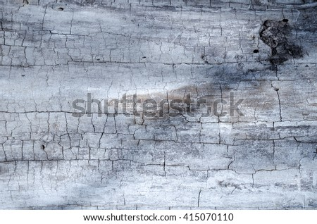 Wooden texture of an old tree with cracks and desaturated color.