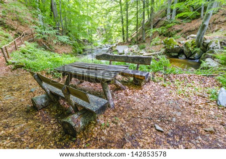 wooden timber bench in rain forest olympic national park, autumn leaves and spring green trees mixture - stock photo