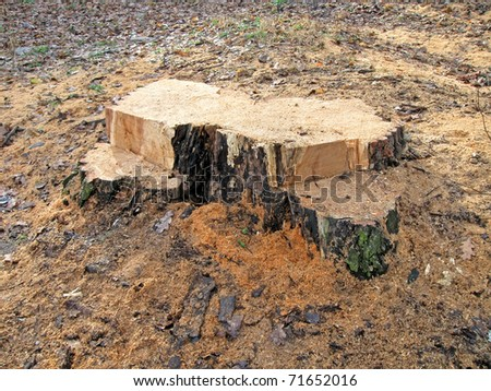 wooden tree stub with sawdust, forest ecological stress concept.
