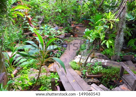 Wooden Walkway in a Lush Tropical Garden