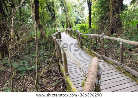 Wooden walkway in forest green at the highest mountain During heavy fog in Thailand